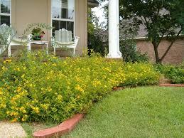 front yard landscaped with lantana gold plants beautiful lantana