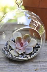 how to make hanging succulent terrariums popsugar home