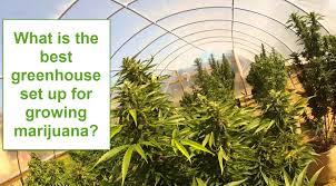 what is the best greenhouse set up for growing marijuana