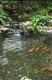 garden u0026 landscape beautiful koi fish pond design regent
