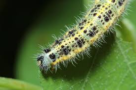 Garden Pests Identification - identifying common garden pests secretgarden co uk landscape