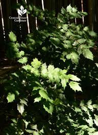 native texas plants for shade spotlight on shade u0026 top tree mistakes central texas gardener