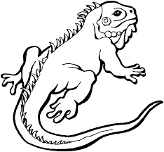 iguana coloring page free printable iguana coloring pages for kids