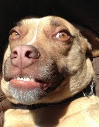 Weird Smile Meme - my dog has a pretty weird smile aww