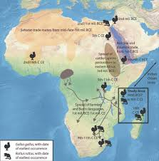 Indian Ocean Map Early Indian Ocean Trade Routes Bring Chicken Black Rat To