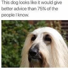 Advice Dog Meme Generator - 25 best memes about memes memes meme generator