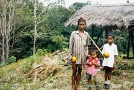 jhum cultivation in tripura jhumias of tripura process