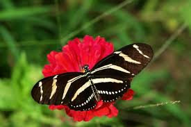 10 most and beautiful butterflies in the the