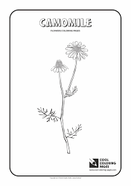 flowers coloring pages cool coloring pages