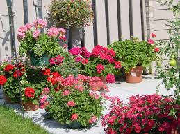 best plants for patio home design ideas and pictures