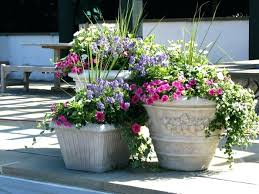 potted flowers how to plant potted flowers desert plants potted flowers