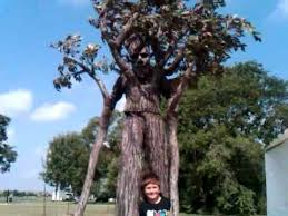 lord of the rings treebeard at bridgeland nature 2012