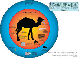 november birth animal vdu u0027s blog it was the camel in the library with the mers cov