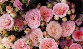 flowers roses eufloria flowers