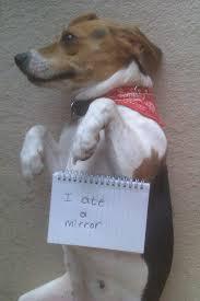 Dog Shaming Meme - dog shaming beagles beagles beagles pinterest dog