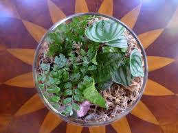 9 low maintenance plants for the office moss terrarium