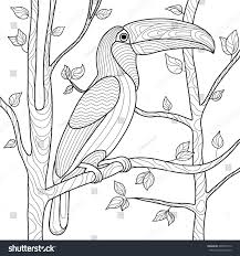 toucan bird coloring book adults vector stock vector 405932512
