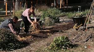 winterizing your garden with edible campus gardens modern
