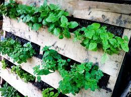Diy Vertical Pallet Garden - the 25 best herb garden pallet ideas on pinterest pallet