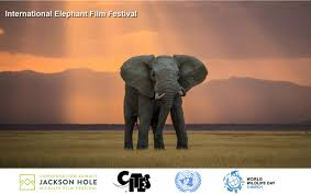 international elephant film festival celebrates world u0027s best