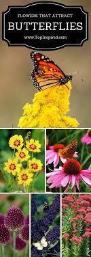 1962 best garden ideas images on butterflies beautiful