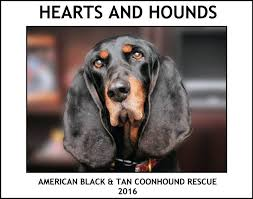 bluetick coonhound rescue illinois american black u0026 tan coonhound rescue home facebook