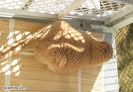 outdoor cat patio catio showcase building a porch enclosure for