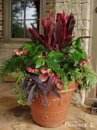 452 best creative plant ideas images on pinterest gardening