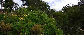 australian garden flowers explore gardens balboa park