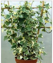 Support For Climbing Plants - how to grow climbing plants