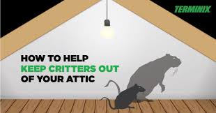 how to help keep critters out of attic terminix