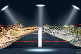Difference Between Family Room And Living Room by What U0027s The Difference Between An Alligator And A Crocodile