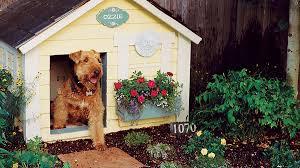 Good Backyard Pets Backyard Ideas For Dogs Sunset