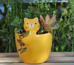 cute cat planter with live succulents