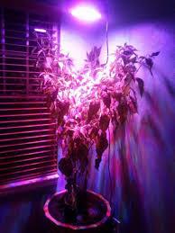 ufo led grow light full spectrum ufo led grow light 135w equivalent round panel