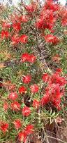 irish native plants climatic zone plants