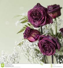 dried roses vintage dried bouquet stock photo image of artistic 69177322