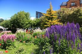 file flower garden in ushuaia 5542996965 jpg wikimedia commons