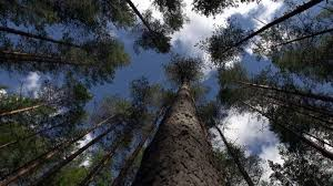 the world u0027s biggest forest is in our own backyard and we need to