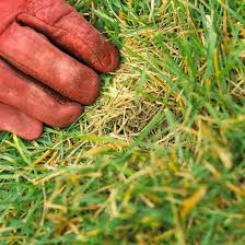 How To Care For Your by 100 Best Spring Lawn Care Tips Images On Pinterest Lawn