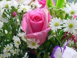 Rose Flower Images πάνω από 25 κορυφαίες ιδέες για Rose Flower Wallpaper στο