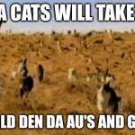 Herding Cats Meme - cat herding cats meme generator imgflip