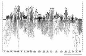 why plant native plants plants for birds audubon south carolina