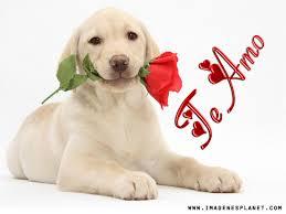 imagenes tiernas y romanticas imagenes tiernas de amor con frases romanticas imágenes de amor