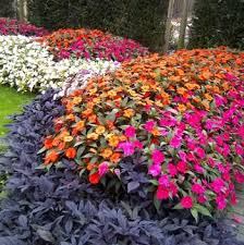 18 best sunpatiens images on pinterest compact flower beds and