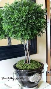 Topiary Balls With Flowers - 38 best moss balls images on pinterest garden ideas flowers and
