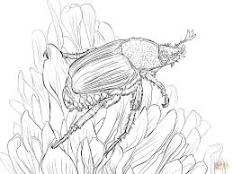 japanese beetle sits on flower coloring page free printable