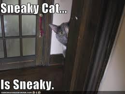 Sneaky Cat Meme - sneaky cat arik hesseldahl news allthingsd