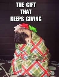 Pug Birthday Meme - pugs112