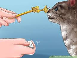 How To Keep Cats Off Outdoor Furniture by How To Keep Cats Off Outdoor Furniture Outdoor Goods
